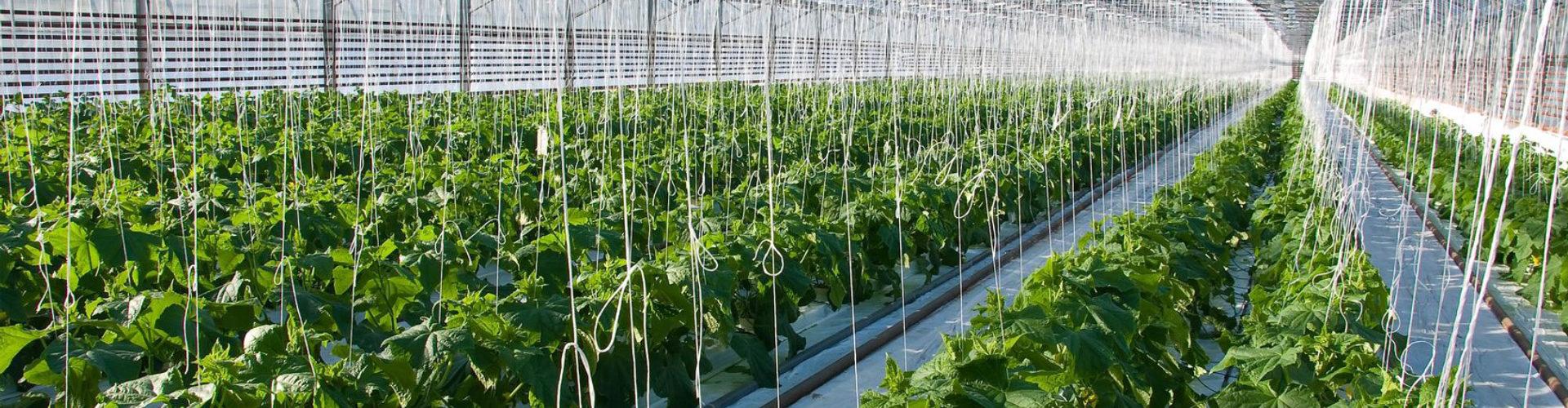 Agroculture Banner